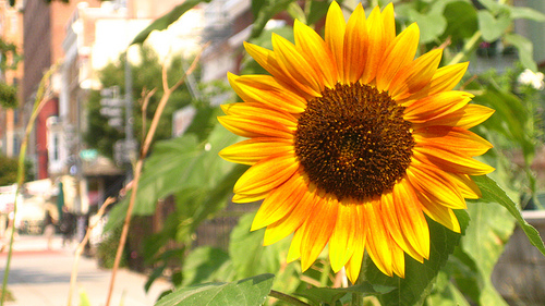 Sunflowers for Lammas by The Witch of Howling Creek